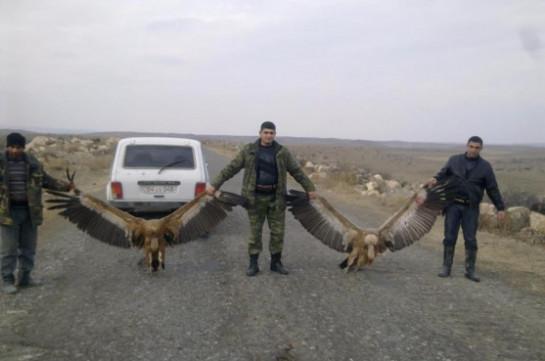 Староста села Шенаван развлекается отстрелом занесенных в Красную книгу птиц