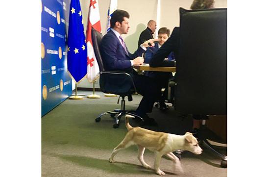 Թբիլիսիի քաղաքապետը շան հետ է ժամանել աշխատավայր. Լուսանկարներ