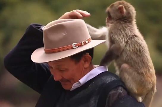 «Կապիկների հայր». Չինացի պապիկը կերակրում և բուժում է մակակաների