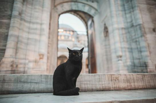 Իտալիայում սնահավատ միանձնուհին վթարի է ենթարկվել՝ փորձելով խուսափել սև կատվի հետ հանդիպումից