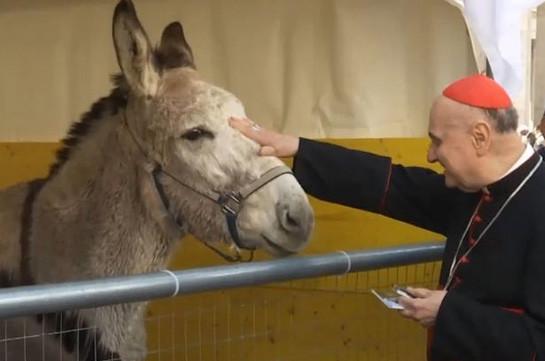 Իսպանիայում քահանաներն օրհնել են կենդանիներին
