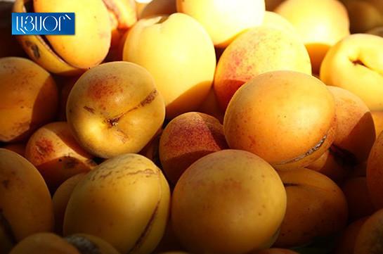 Из-за грибковых болезней урожай абрикоса в Армении в 2019 году сократится на 50%