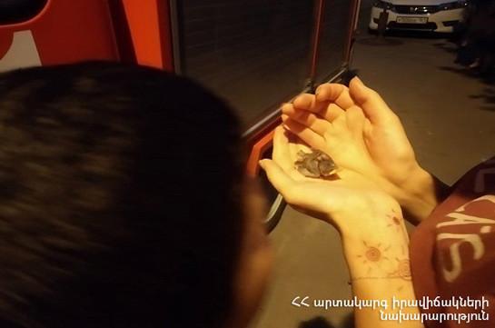 Երևանում փրկարարները ճնճղուկի ձագին տեղավորել են բնի մեջ