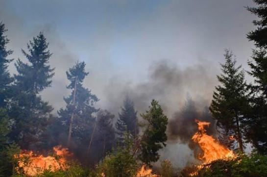 Ինդոնեզիայում մոլեգնող անտառային հրդեհները սպառնում են բնապահպանական նոր ճգնաժամով