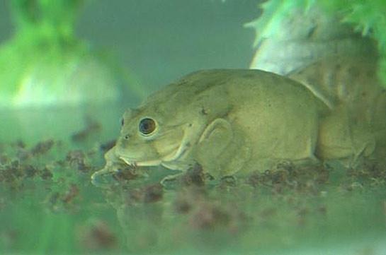 В Перу представили лягушек, конфискованных у торговцев и контрабандистов (Видео)