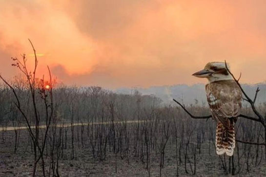 Australia bushfires: airy warnings appear in Queensland afterwards another South Wales