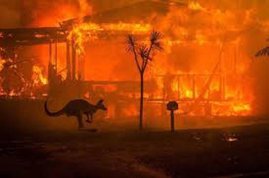 Ди Каприо пожертвовал $3 млн на спасение Австралии