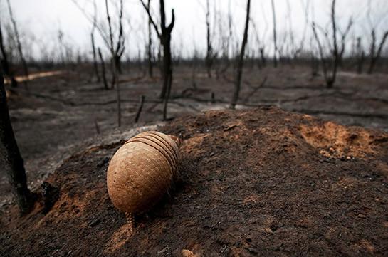Австралия выделит 34,5 миллиона долларов на восстановление природы