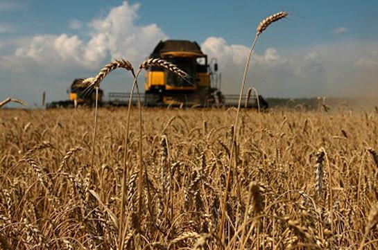 Էկոնոմիկայի նախարարությունը գյուղատնտեսների համար մշակել է աշնանացան ցորենի արտադրության խթանման պետական աջակցության ծրագիրը