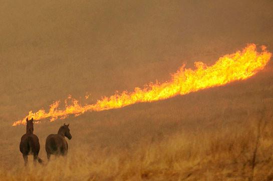 Власти штата Орегон эвакуировали 10% населения из-за лесных пожаров (Видео)