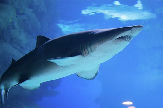 В Австралии акула напала на девушку, но только сломала зуб