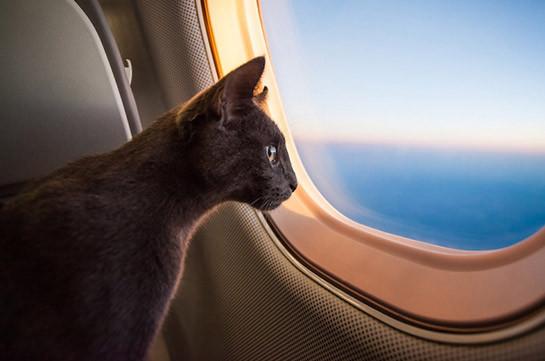 Самолет совершил экстренную посадку из-за кота